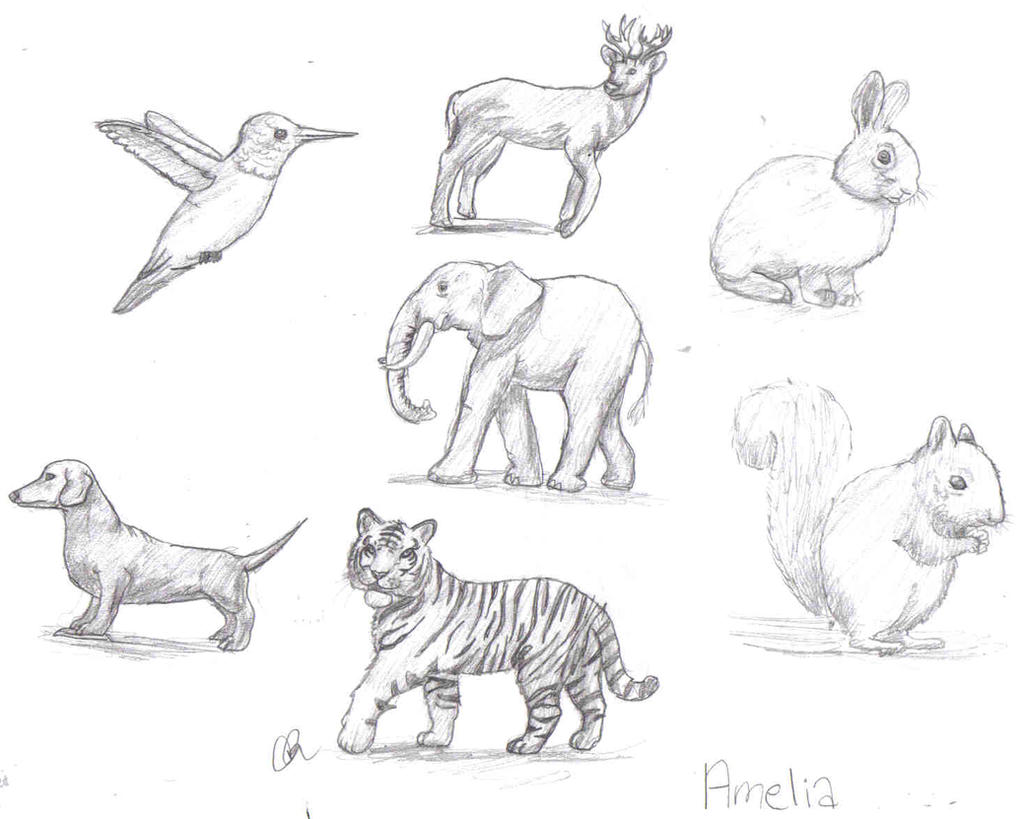 Realistic Animal Drawings By