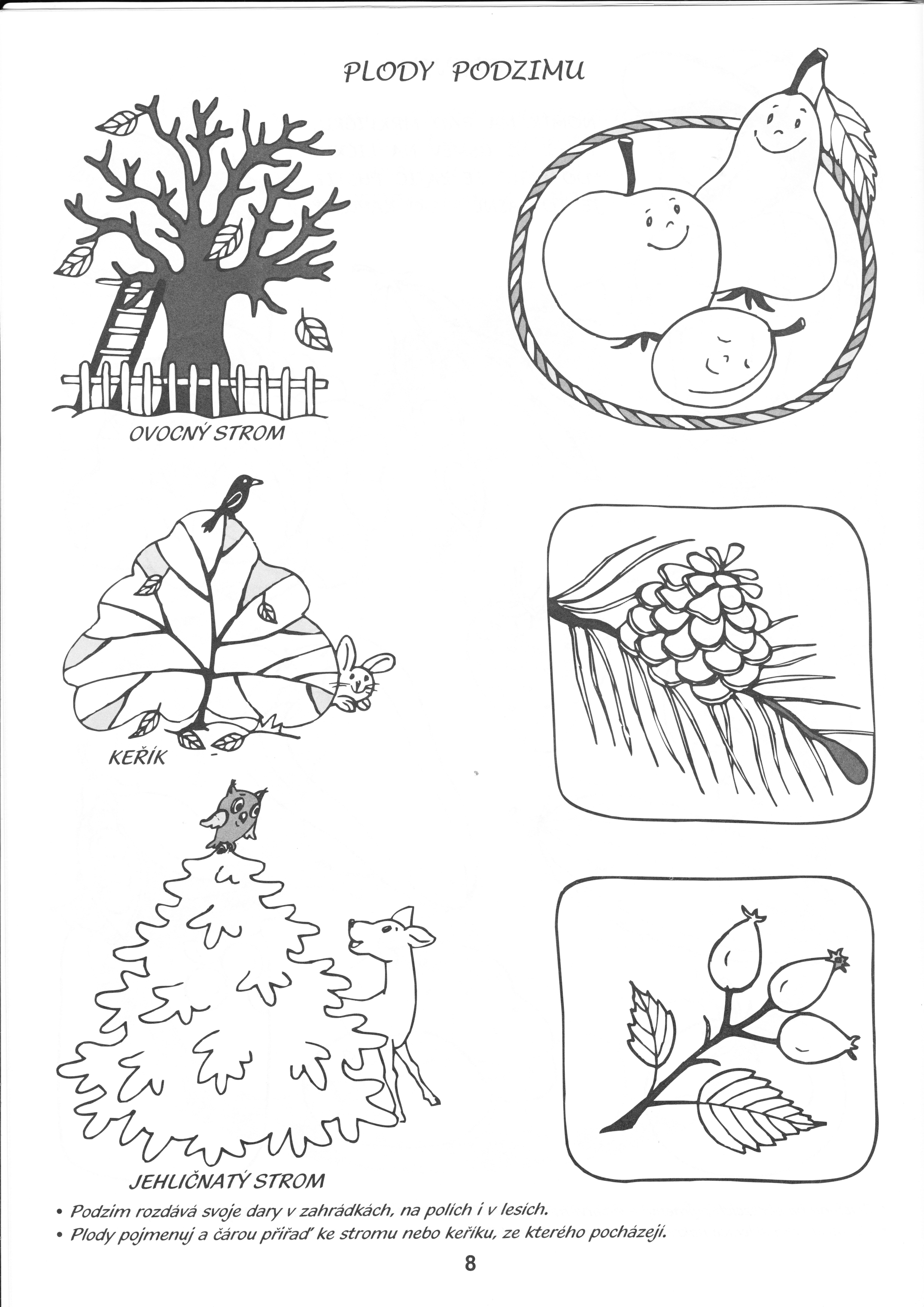 Plody Podzimu Autumn Activities For Kids Autumn Activities Coloring Pages