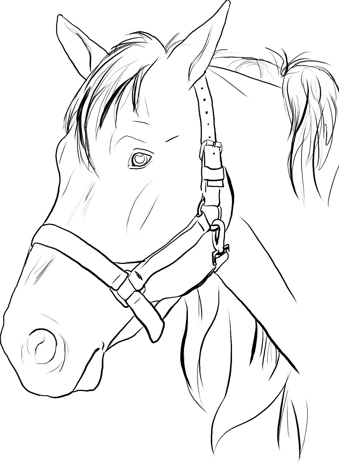 20 Horses Ideas Horse Coloring Pages